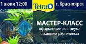 Как правильно запустить аквариум с живыми растениями
