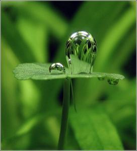 Пузырек воздуха на аквариумном растении