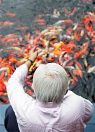 Рыбки снимают стресс