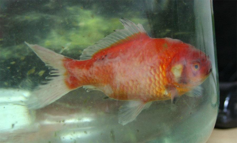цветные рыбки фото