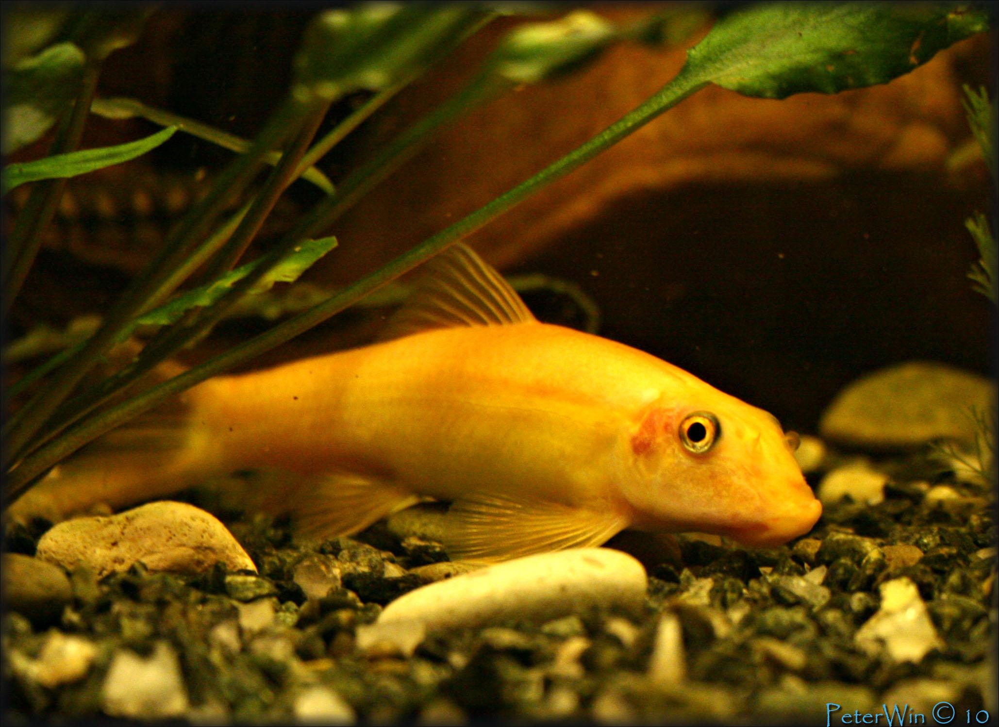 картинки чудо рыб