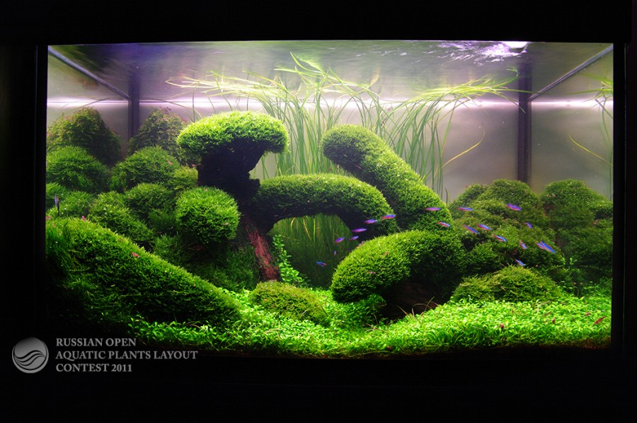 Aquarium Aquart Center, Aquascaping Paludariums, Aquarium Design ...