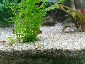 Развенчаем миф о непригодности песка в аквариуме?