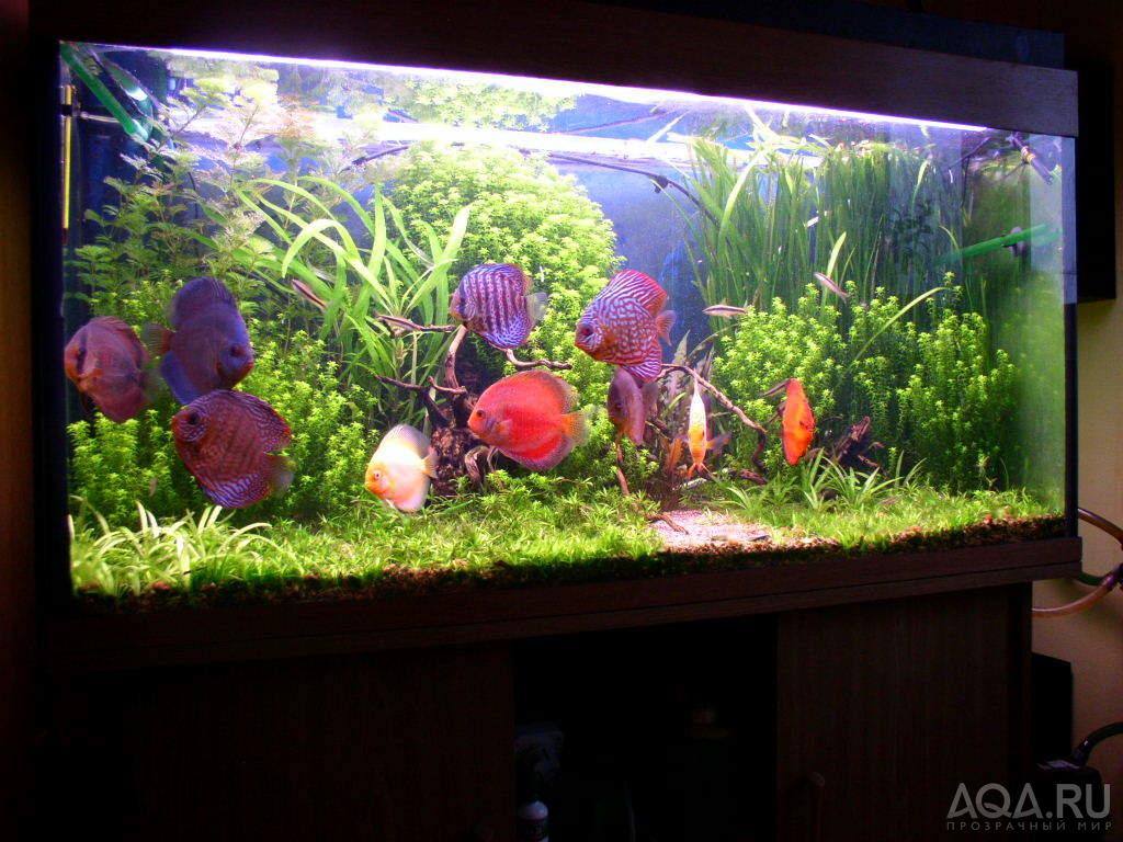 Как сделать так чтобы аквариум не зеленел