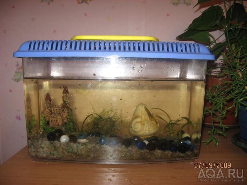 Своими руками отсадник для аквариума
