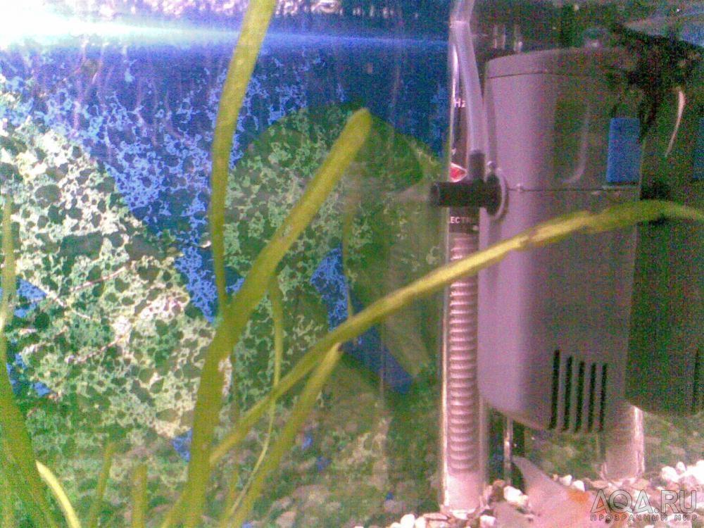 Почему не работает компрессор в аквариуме