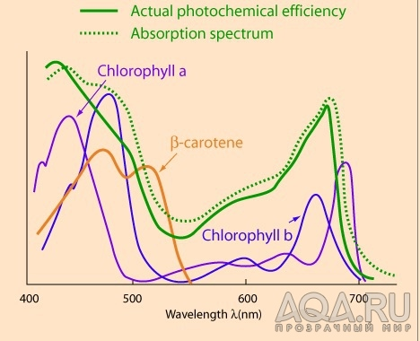 how light affects spinach photosynthesis