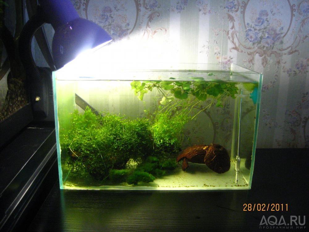 Малявочник для аквариума