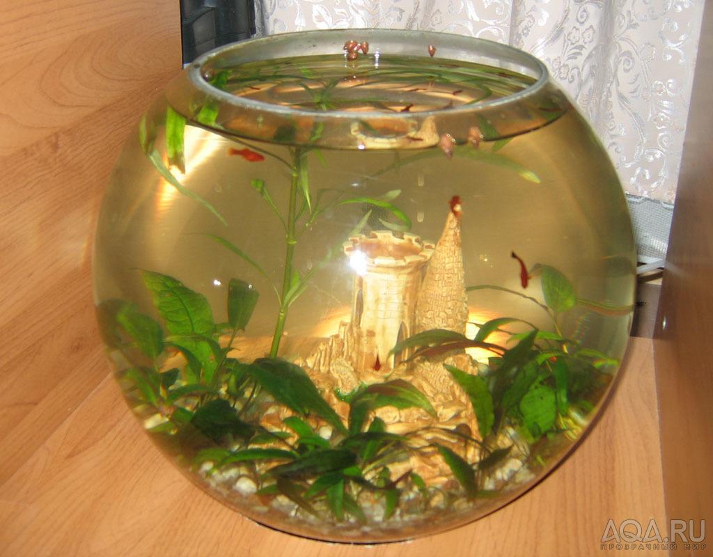 как оформить аквариум фото круглый