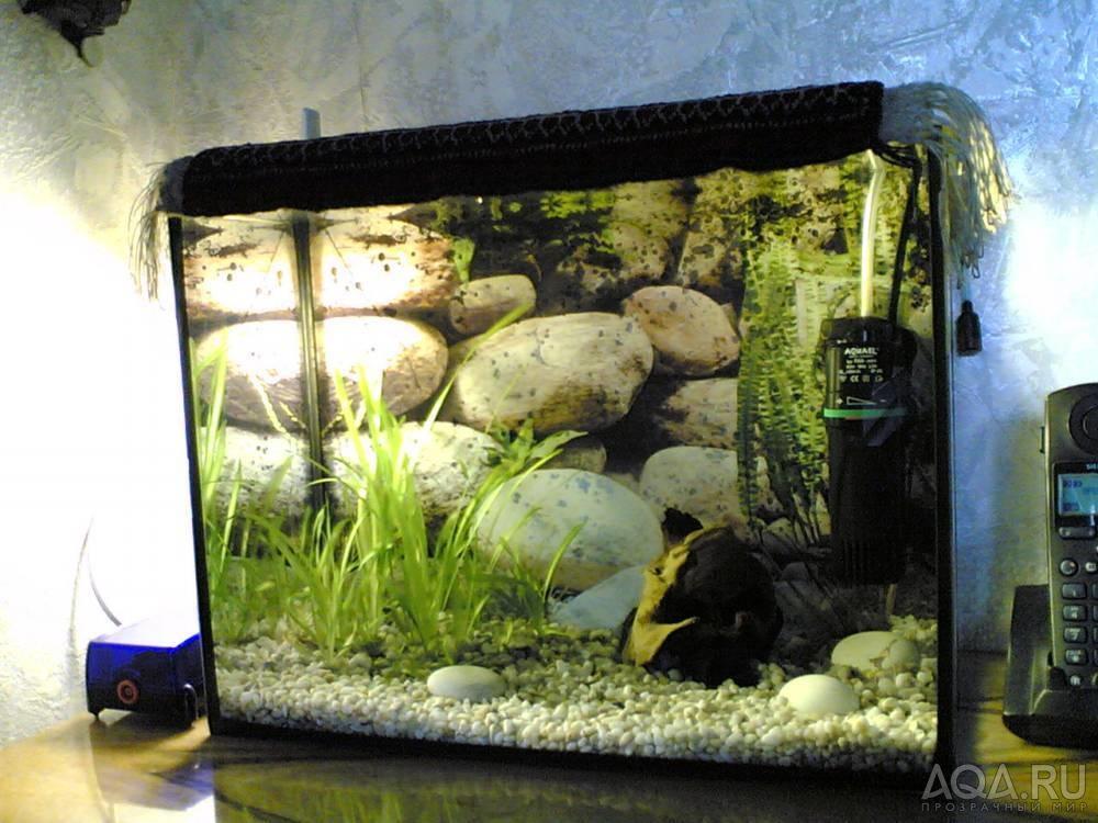 Покупались рыбки сегодня, тк аквариум новый с отстоянной водой (стоял 7 дней)
