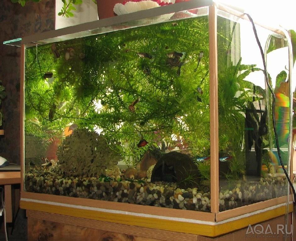 Какие растения можно сажать в аквариум к красноухим черепахам
