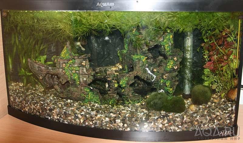 Грунт для аквариума с живыми растениями своими руками 55