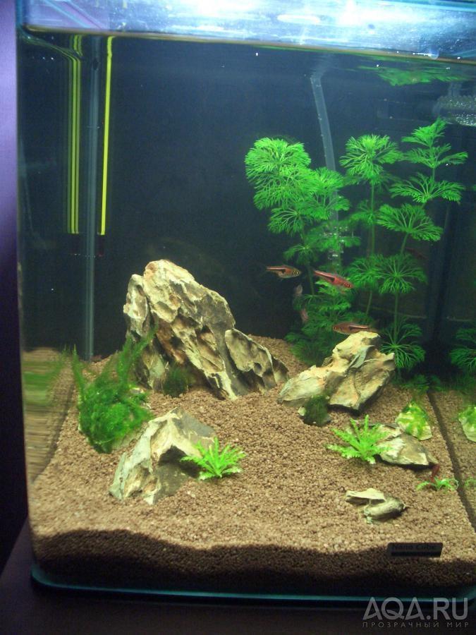 Фото дизайна аквариума 20 литров
