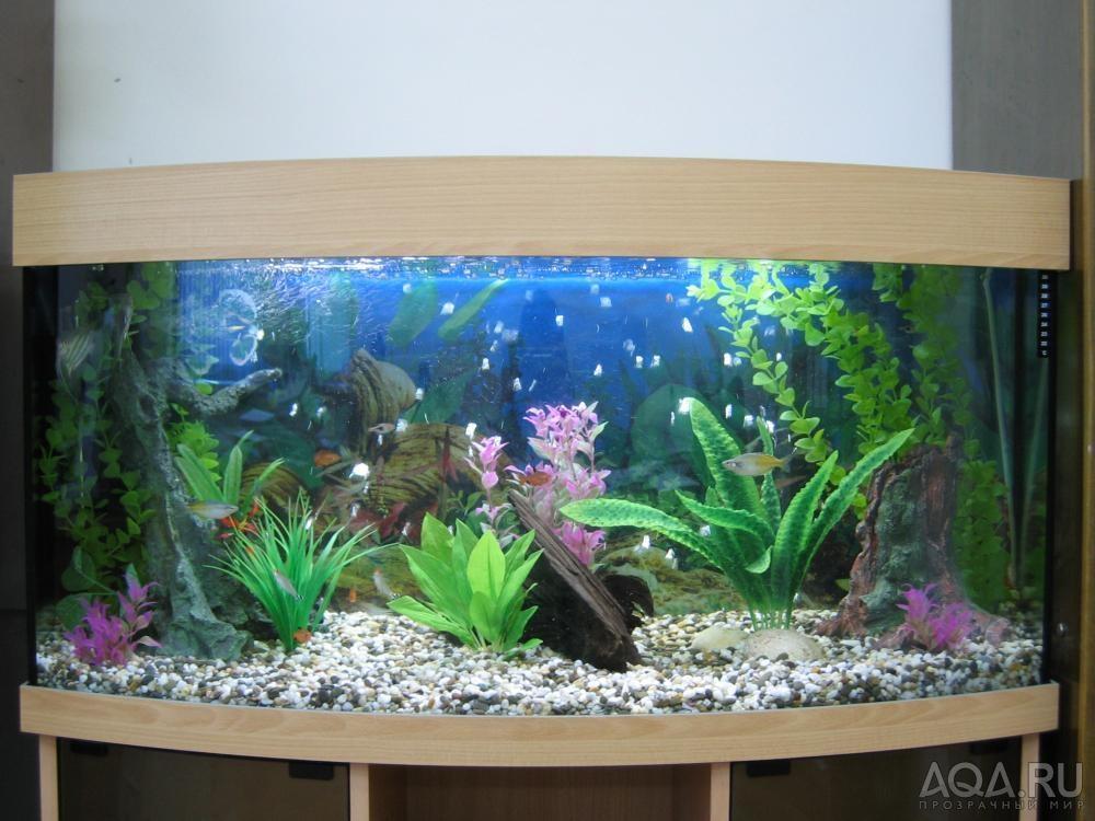 Как красиво оформить аквариум на 100 литров своими руками 34