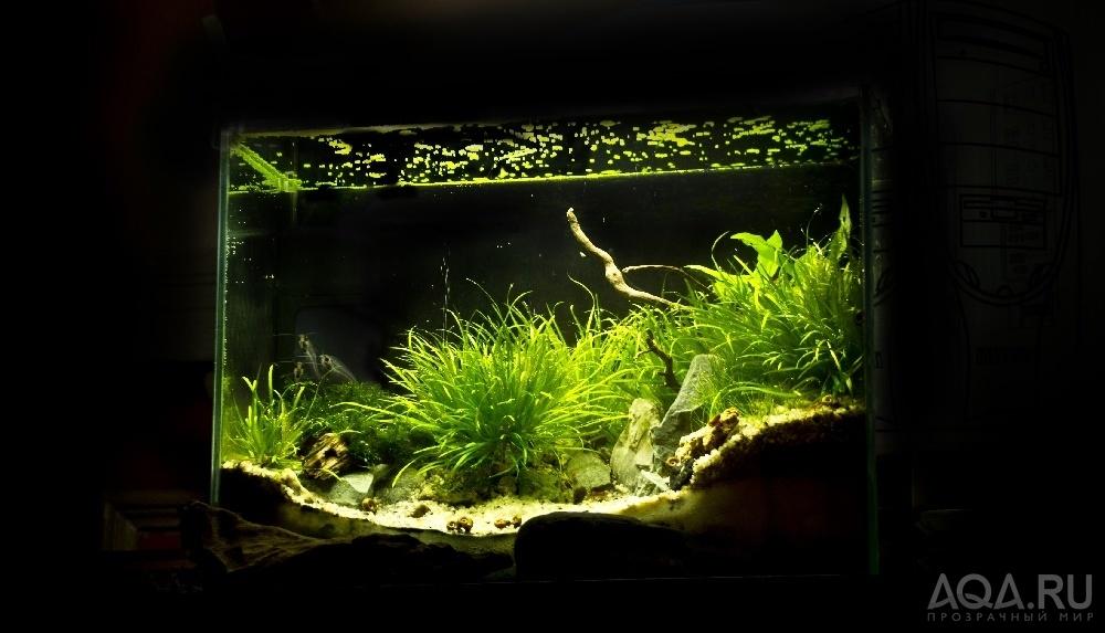Фото аквариум на 30 литров дизайн
