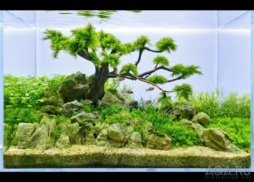 Деревья в аквариуме как сделать