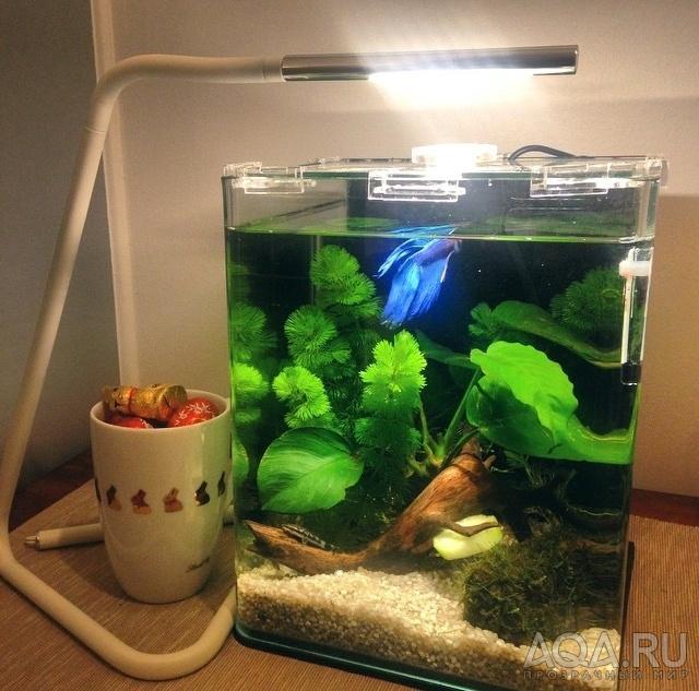 Дизайн аквариума для петушка
