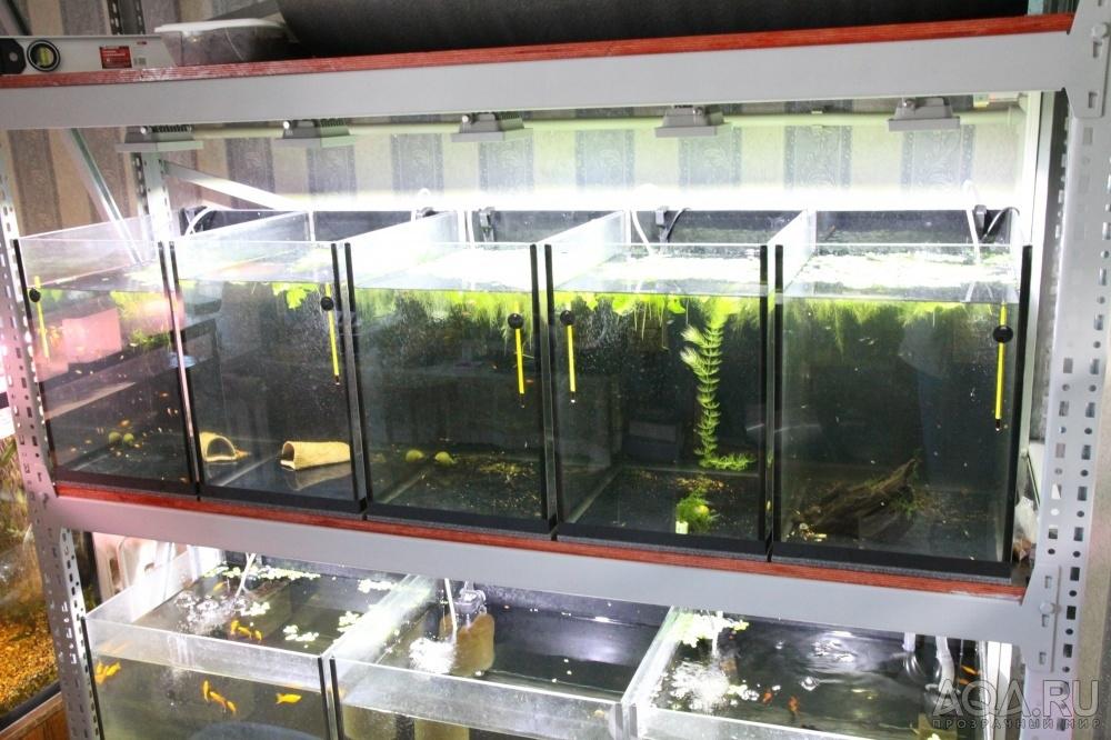 Выращивание раков в домашних условиях аквариум