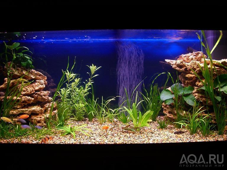 Как оформить аквариум своими руками на 300 литров