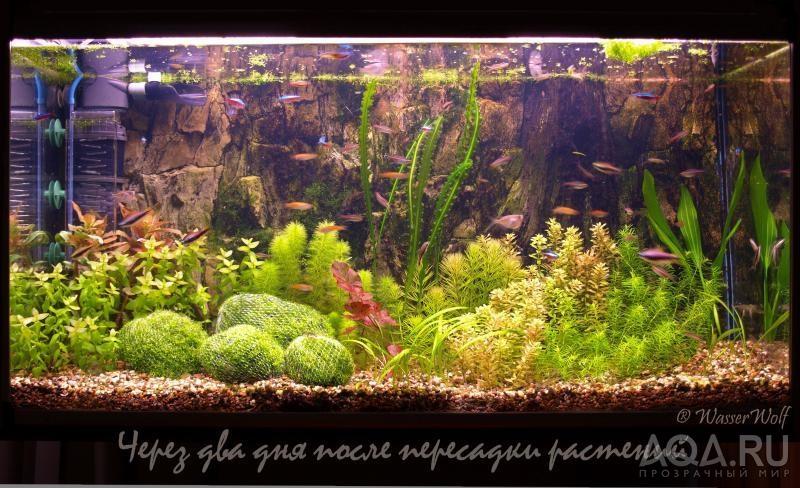 Растения в аквариуме сажают в 659