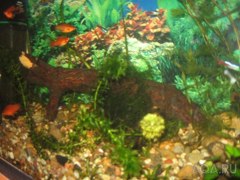 Коряга из дуба для аквариума