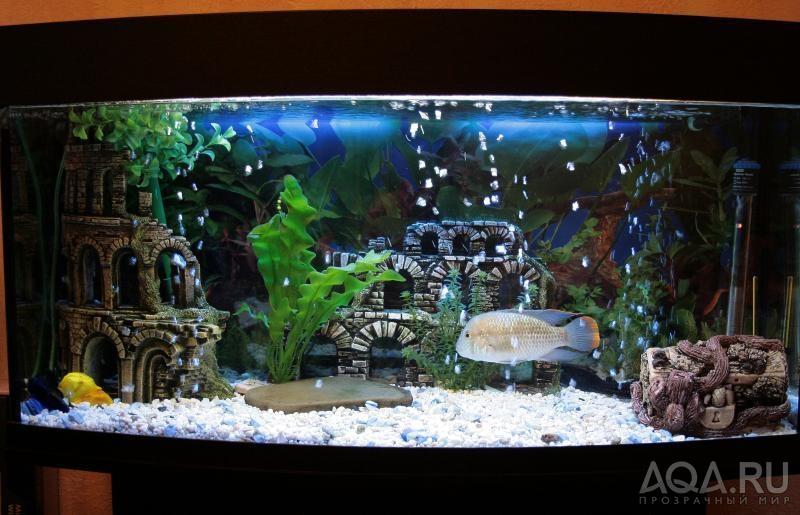 Как оформит аквариум фото