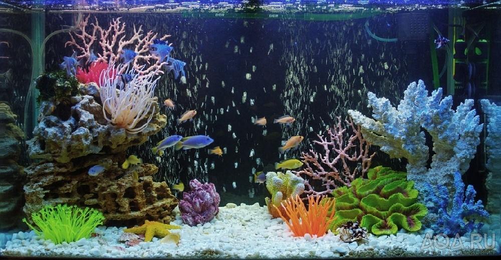 Если в пресном аквариуме преобладают