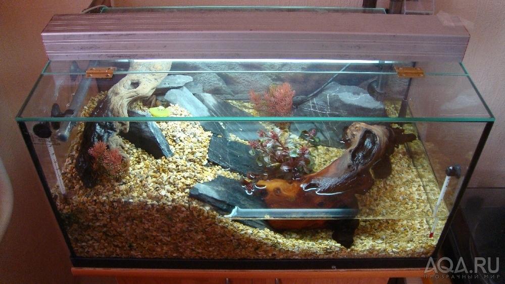 сонник краб в воде