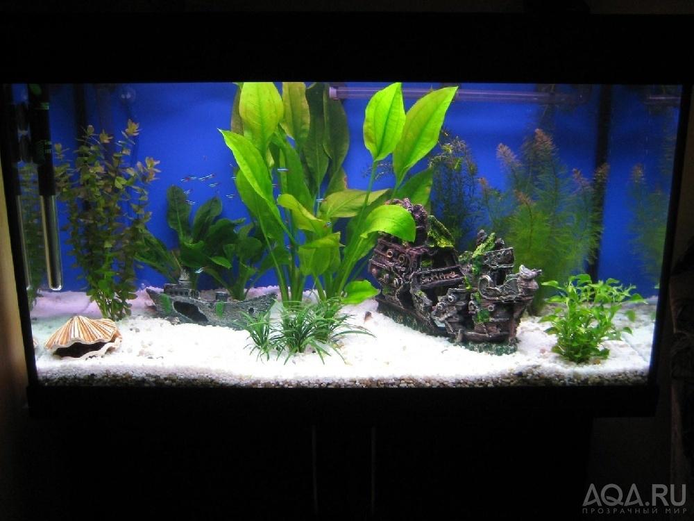 Как оформить аквариум на 150