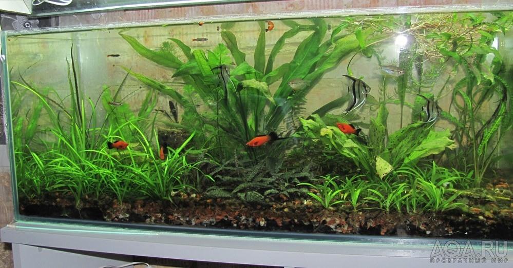 Грунт и подложка в аквариуме