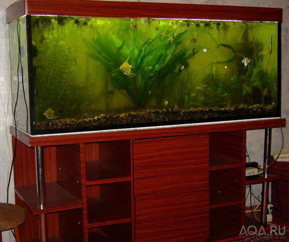Как красиво оформить аквариум на 100 литров своими руками 31