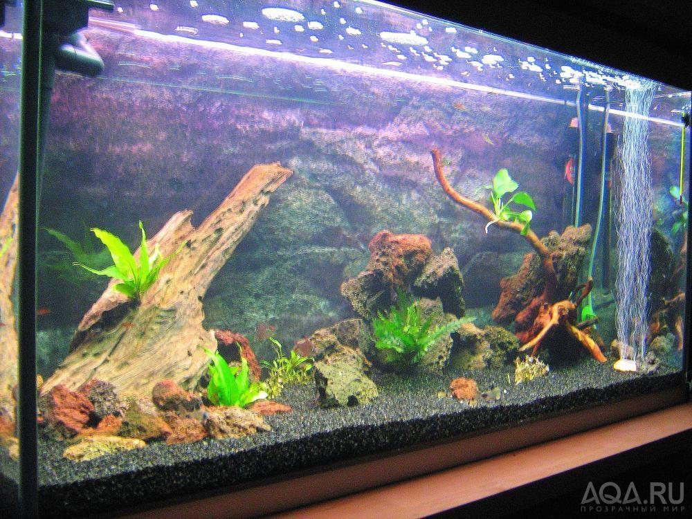 Фото дизайна аквариумов 200 литров