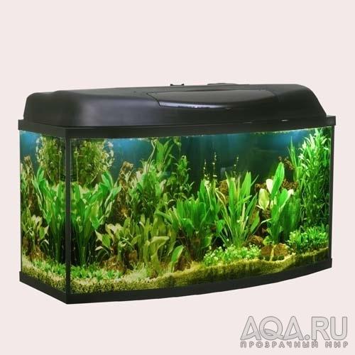 ФОТО.АКВАРИУМ.РУ - хочу биг акву, фото аквариумов, рыбок, молюсков...