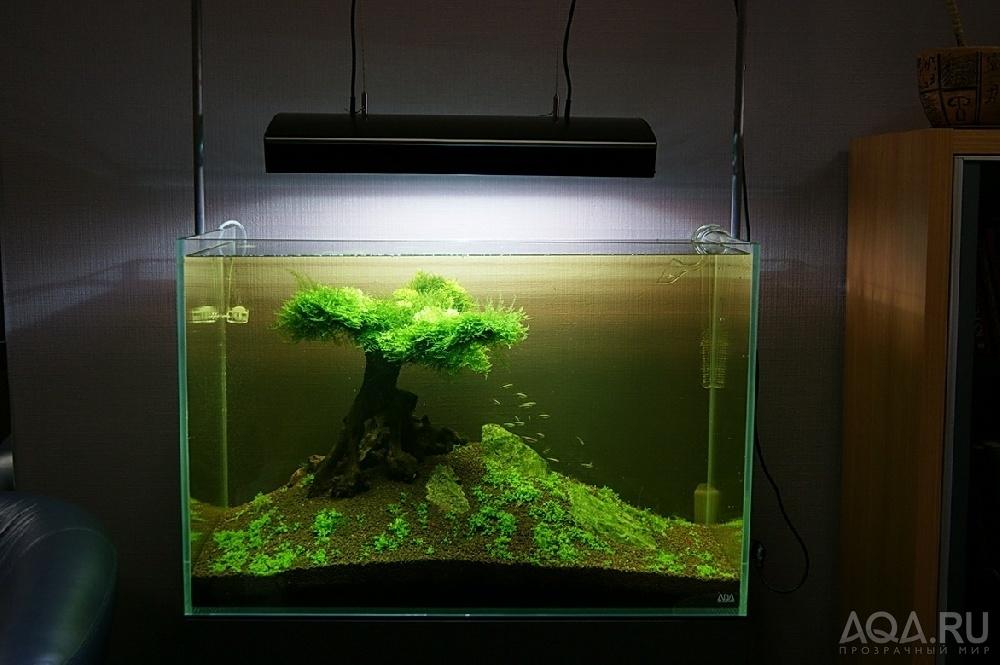 Оформление аквариума на 20 литров своими руками фото