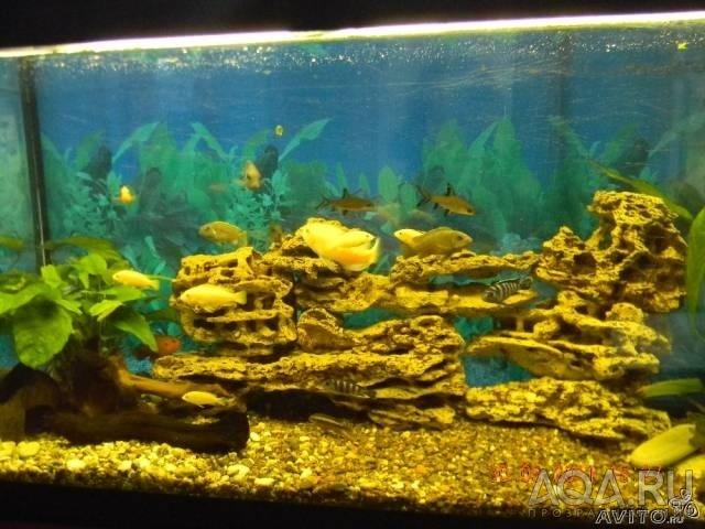 Как сделать песчаник для аквариума
