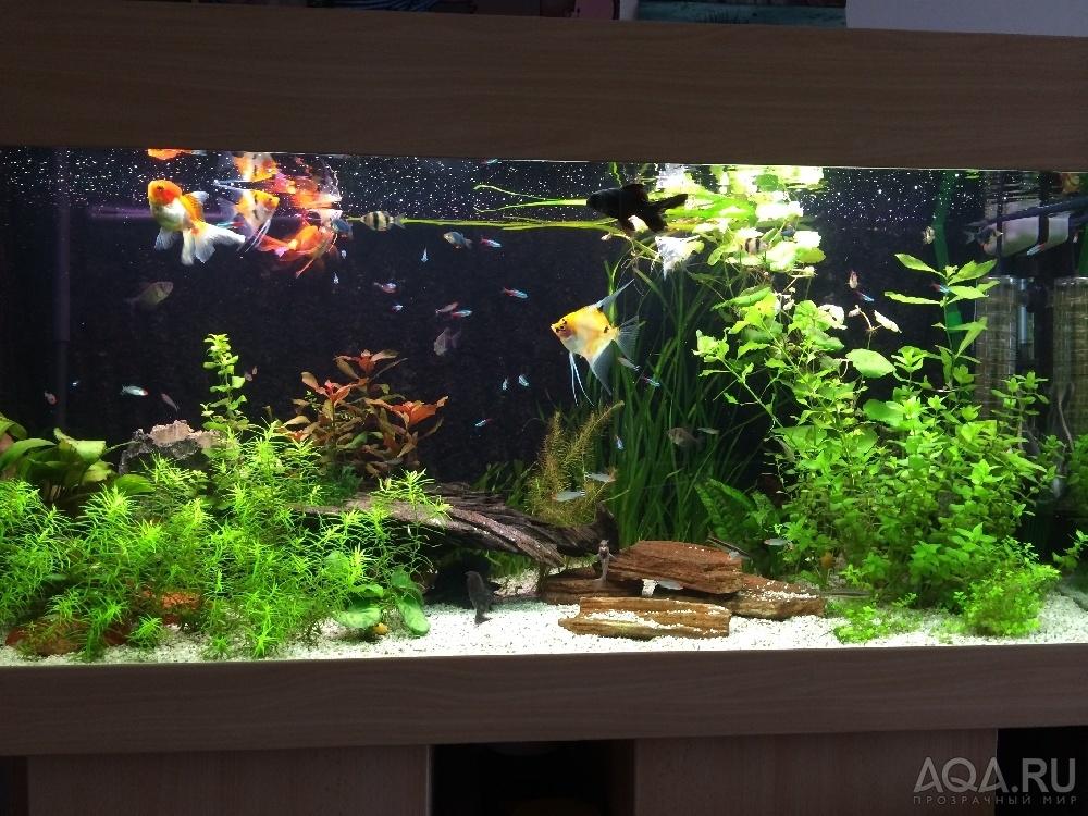 Как оформить аквариум 300 фото