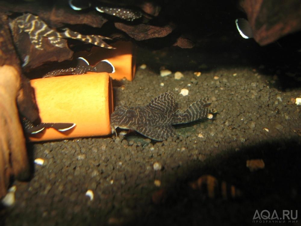 Укрытие для сомов в аквариуме своими руками 58