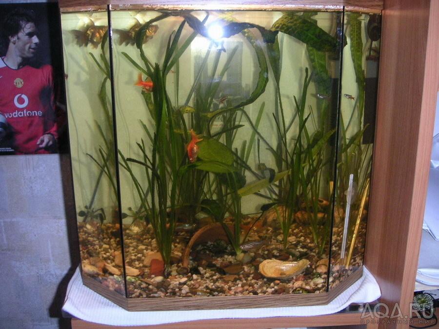 дизайн аквариумов фото с золотыми рыбками