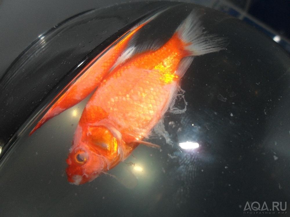 прогноз погоды дохнут рыбы в аквариуме хотят