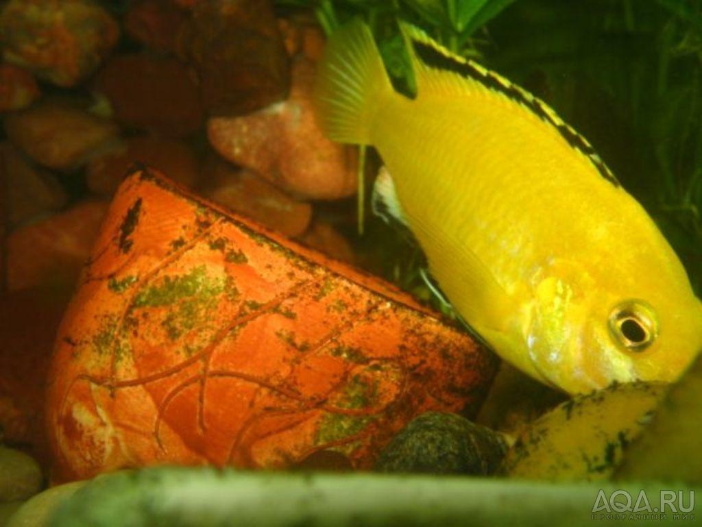 Как лечить аквариумных рыбок от белых пятен