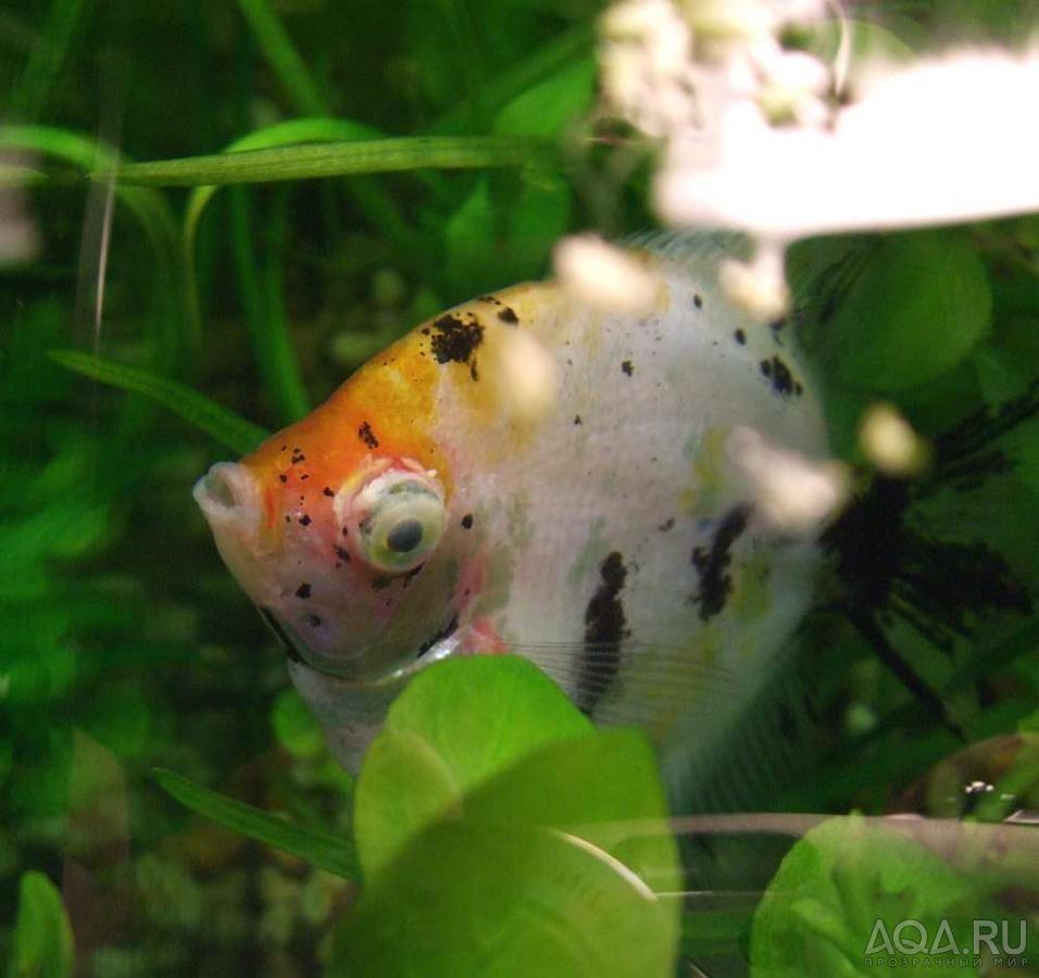Если не принять мер, то обитатели аквариума могут погибнуть от отравления.