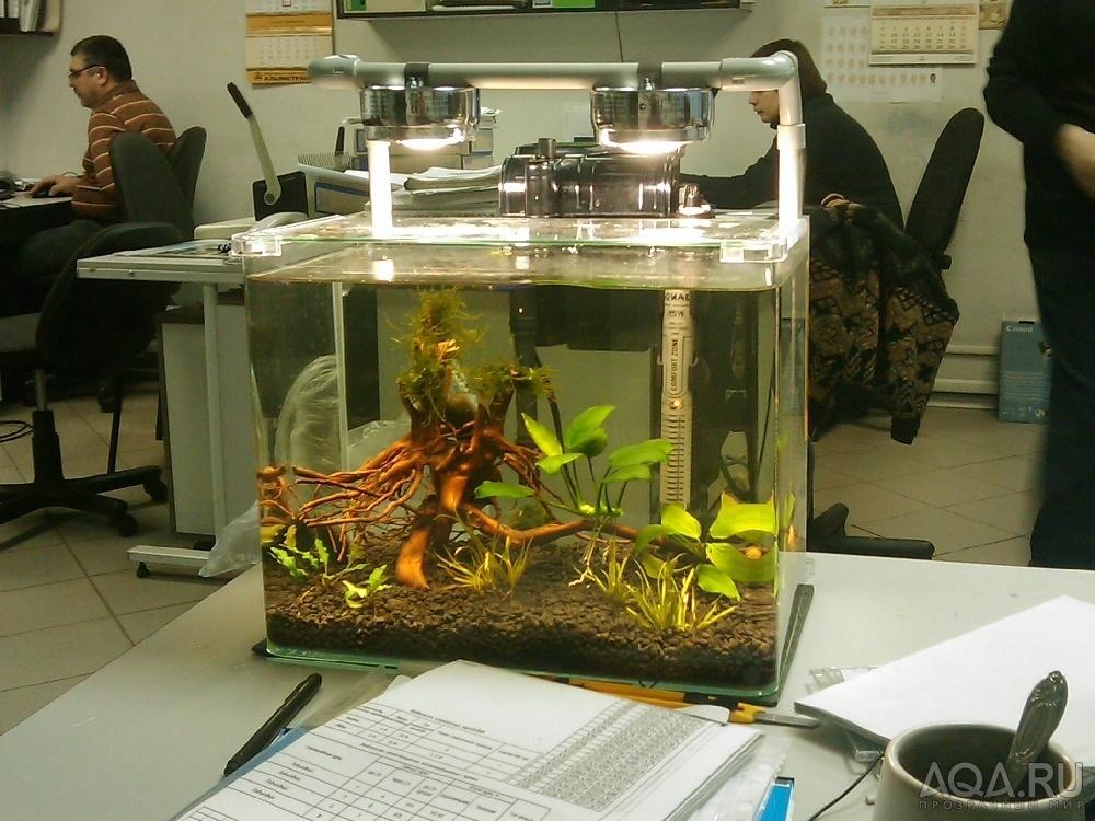 Варить корягу для аквариума