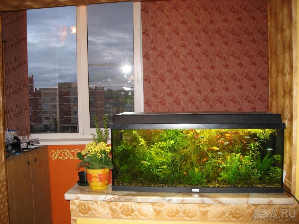 Показать на картинках разные аквариумные водоросли