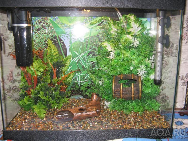 Сад в аквариуме своими руками без воды