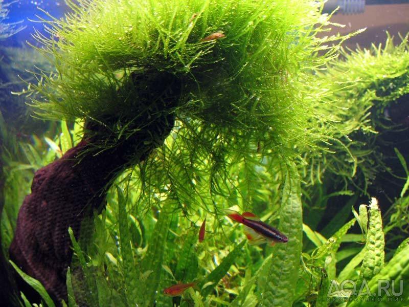Живые растения в аквариуме, безусловно, производят