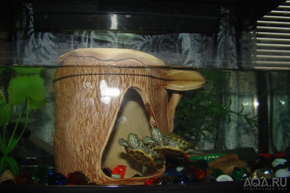 Все для черепах своими руками 912