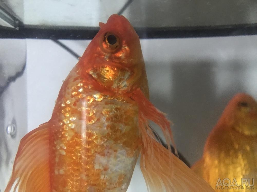 Негр анал у рыбок фото самсон фильмы