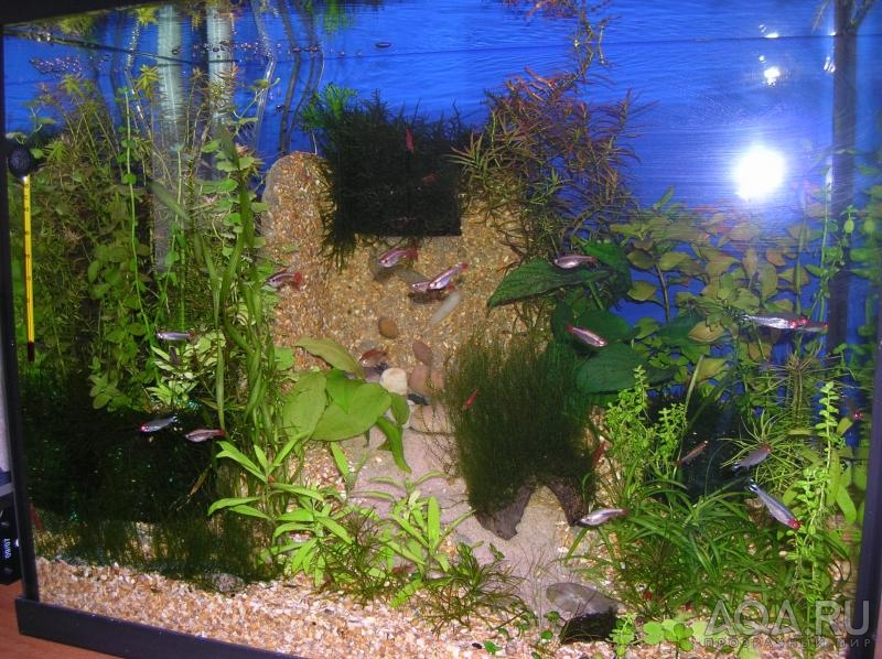 Пескопад в аквариум видео