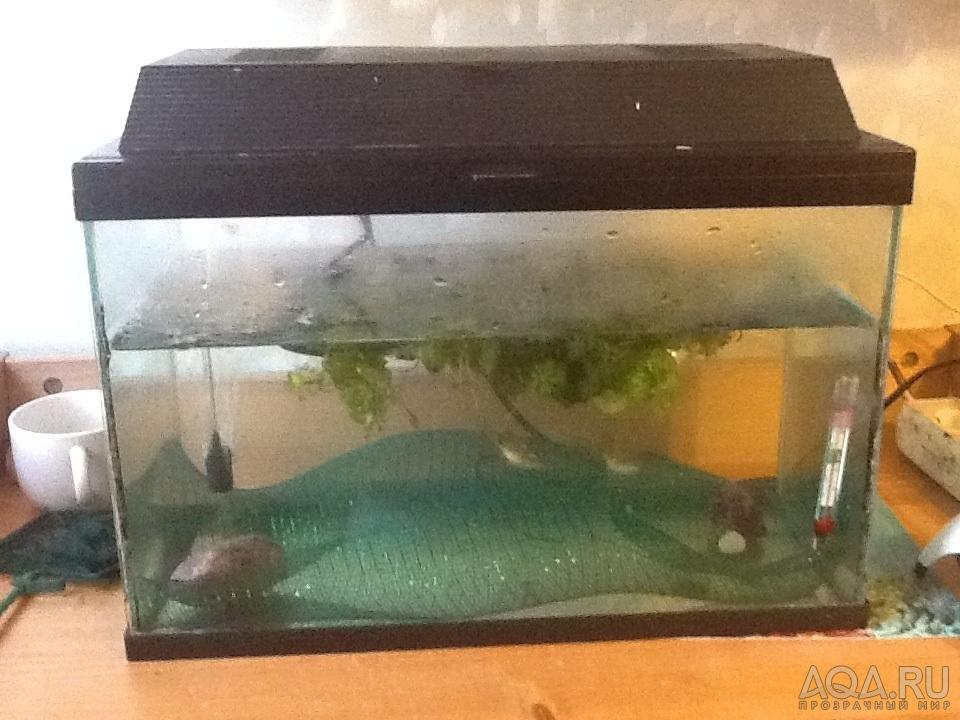 Отсадник для мальков цихлид в общем аквариуме