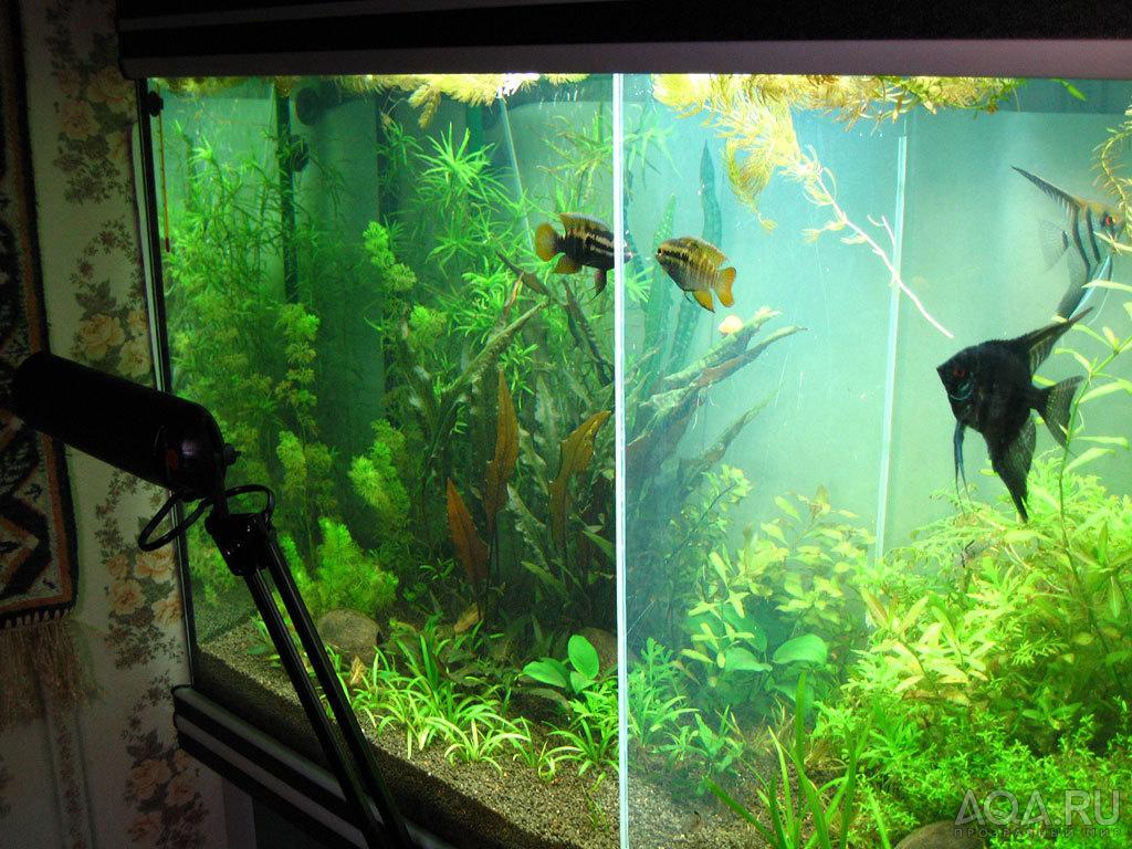 Как сделать перегородку для аквариума